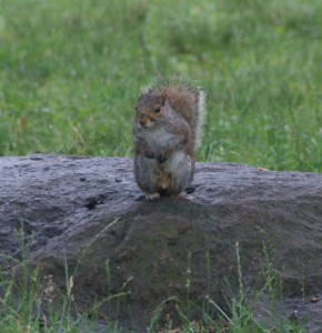 cloisters squirrel